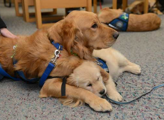 Lutheran comfort dogs. Photo via Religion News Service.